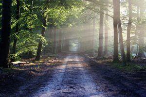 Camino que hay que afrontar sin miedo, como el cáncer