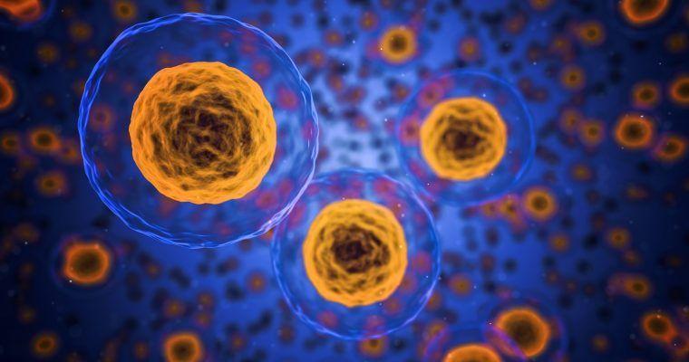 PI3K: la enzima que enlaza la insulina y el cáncer (o «la portera pirómana»)